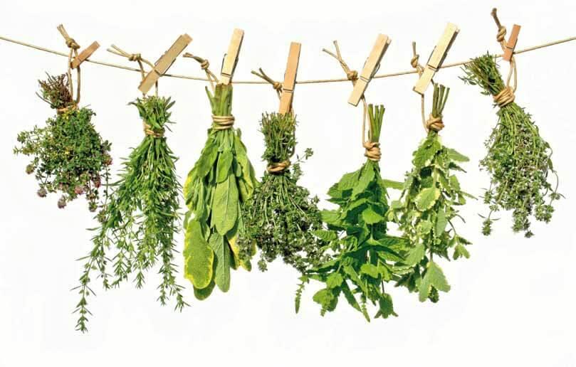 Hiervas medicinales – ¡Salud y bienestar natural para todos!