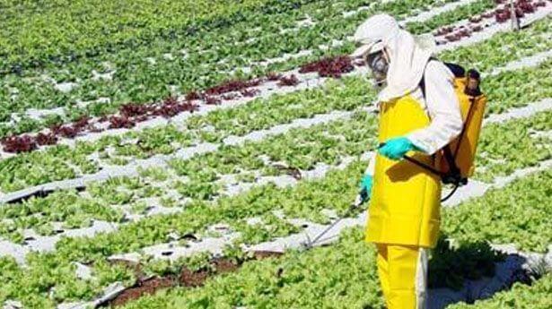 La degradación de la alimentación actual – Agricultura y ganadería