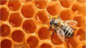 Como usar la miel de abejas