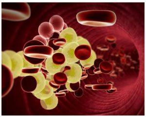 Peligros del descontrol del colesterol