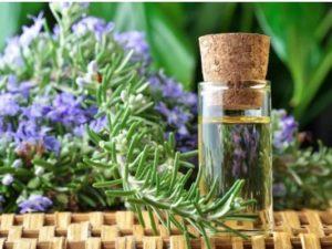 Beneficios de las hojas de romero para la salud