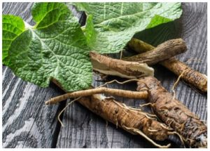 Remedios caseros con la raíz de bardana