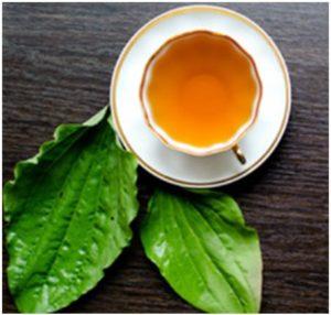 Remedios caseros con hojas de llantén