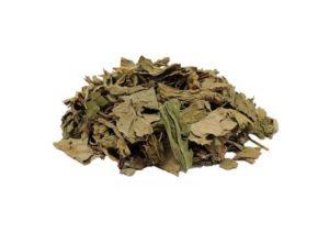 Usos de las hojas de llantén